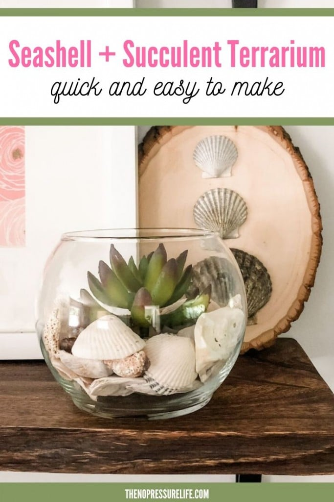 DIY Seashell Succulent Terrarium